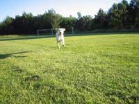 Hugo springer