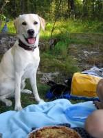 Hugo är på picnic