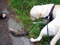 Hugo hittar en älgklöv
