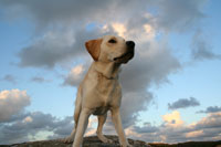 Hugo på klippan