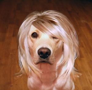 Hugo som Blondie